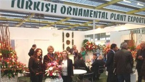 turkish-ornamental-plant-export-holland